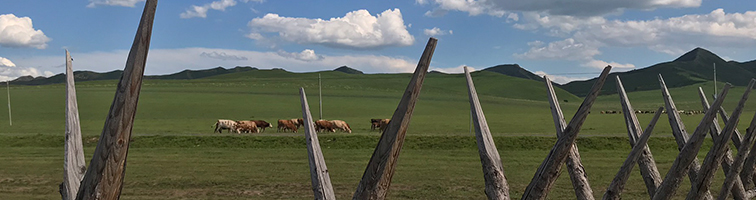 NNI on the Steppes of Inner Mongolia